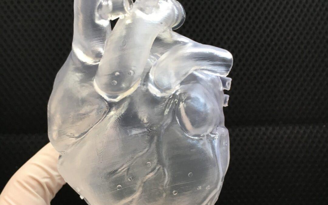 Realizzata la stampa del primo modello di cuore 3D semi-flessibile.